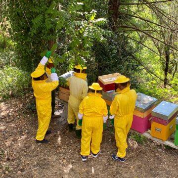 Nuovi apicoltori crescono nel Comune di Parrano