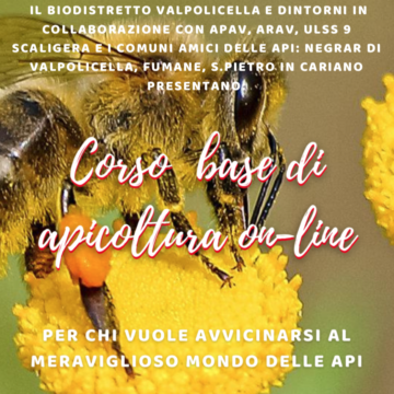 Corso base di apicoltura online