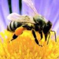 """Manifestazione """"L'ape in città"""" – anno 2021"""